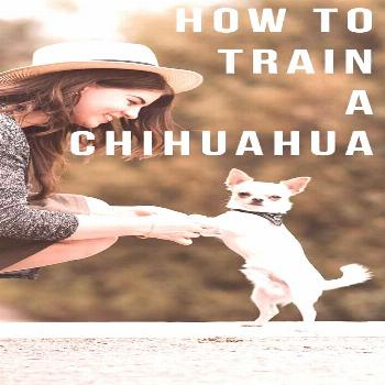 how to train a guide